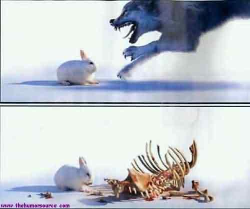 conigli mannari