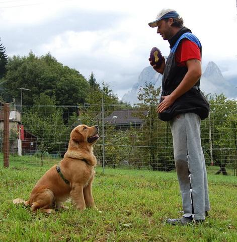 cane fedele due