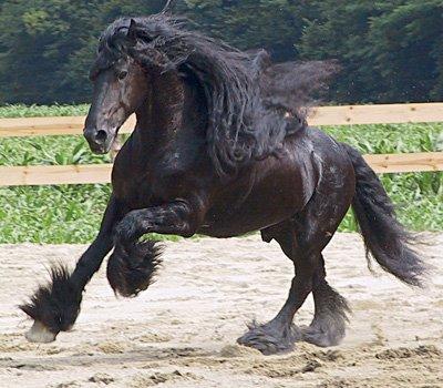 destriero o cavallo da guerra
