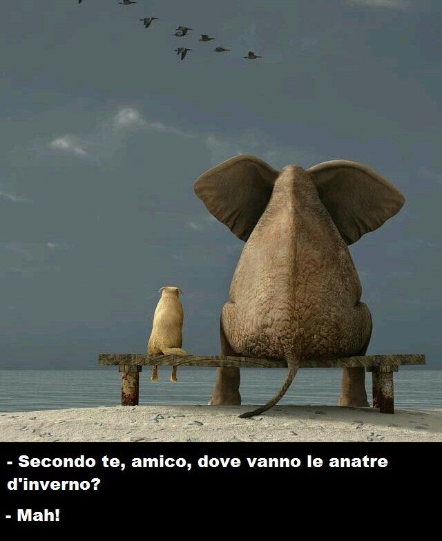 elefante e cane